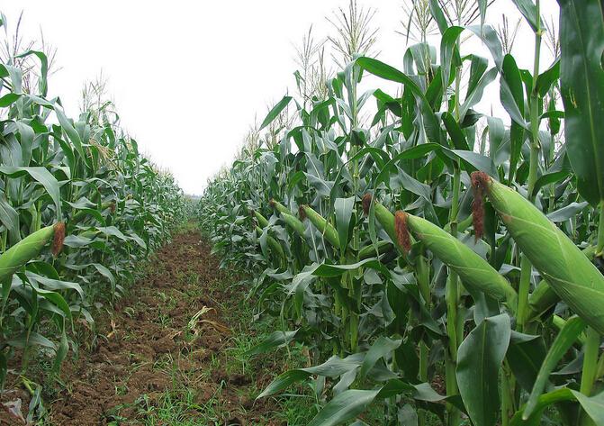 015年复合肥原料价格走低,单质肥尿素、磷酸二铵价格相较于复合肥