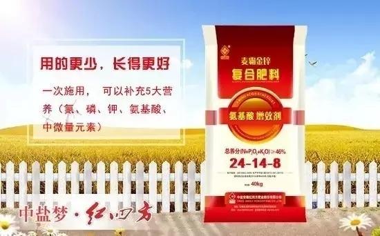 """红四方""""麦霸金锌""""系列复合肥料所添加的氨基酸螯合锌原料中含有谷氨酸、赖氨酸、甘氨酸等二十多种氨基酸,属于复合氨基酸。"""