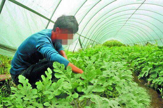 青岛王大哥种蔬菜就选红色劲典硫酸钾系列复合肥!