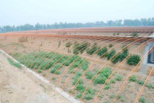 文水县种子肥料批发商哪家强?还是红色劲典品牌强!