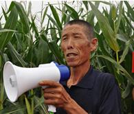 玉米缓释肥显奇效—甘肃凉州老郭很开心